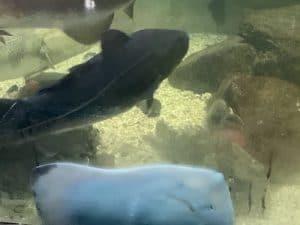 Aquarium du musee du fjord LM Le Quebec LM Le Québec