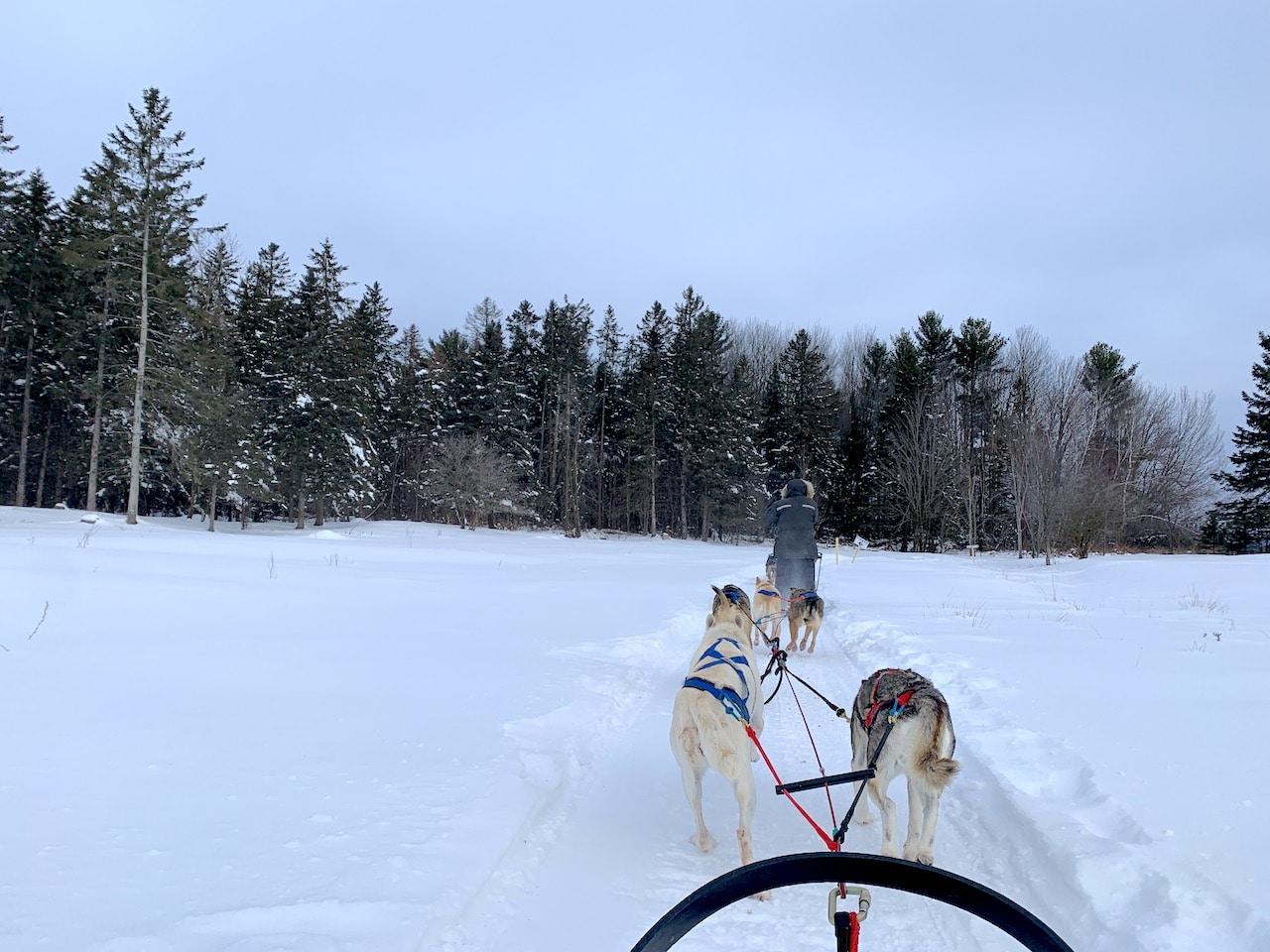Retour sur les chiens de traineau au Canada