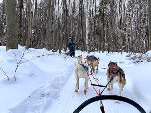 Promenade avec des chiens de traineaux