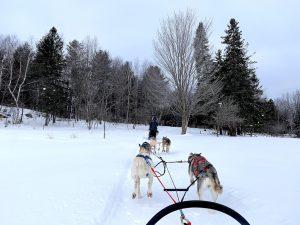 Read more about the article Promenade en traineau à chiens au Québec