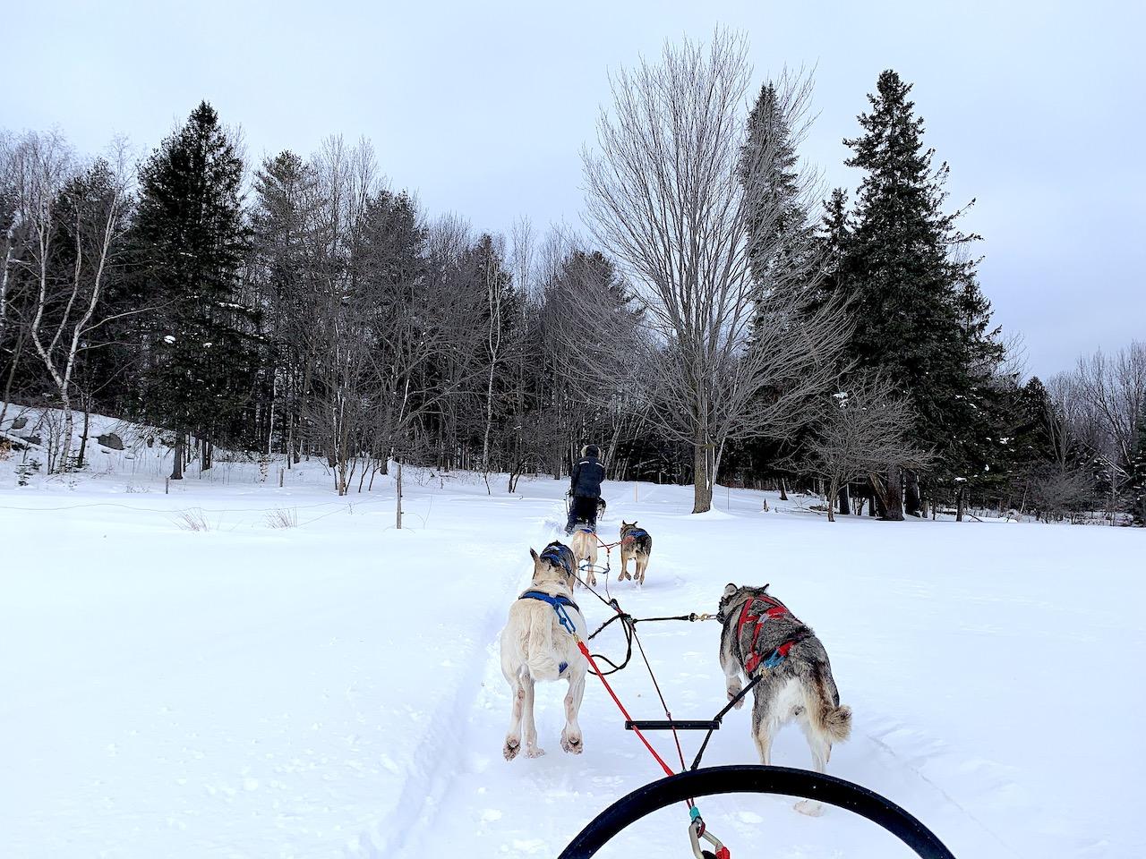 Promenade en traineau à chiens au Québec