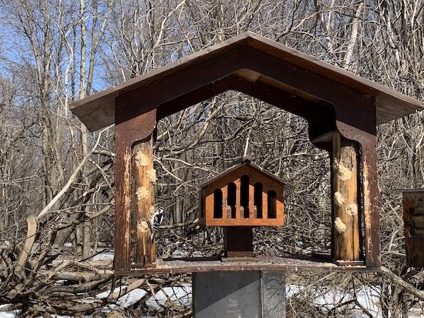 Pic bois au refuge faunique Marguerite dYouville LM Le Québec