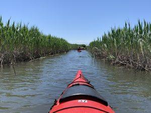 Kayak dans les marais LM Le Québec