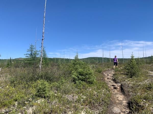 Sentier au milieu dune foret brulee LM Le Québec