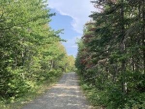 Sentier de retour du Pic Champlain LM Le Québec
